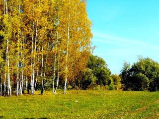 обои Сентябрьский солнечный день на опушке леса фото