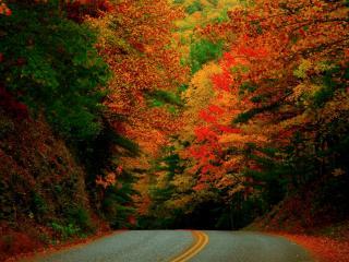 обои Дорога в краски осени фото