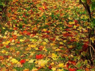 обои Ковёр из жёлто-красных листьев фото