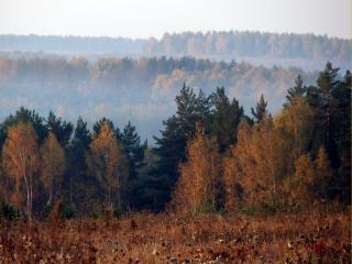 обои Осенний утренний туман над лесом фото