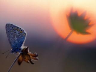 обои Осенняя бабочка фото