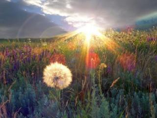 обои Солнечные лучи осветили луг фото