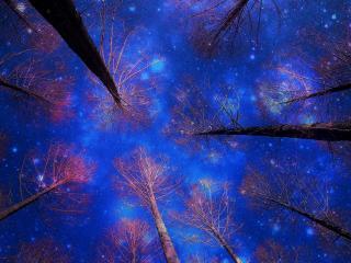 обои Синее звездное небо из под деревьев фото