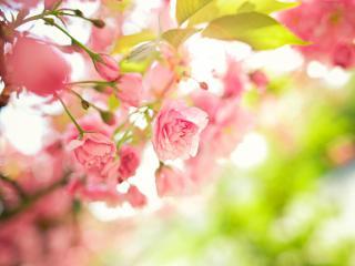 обои Ветка розы весной фото