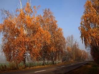 обои Дорога в день осенний фото