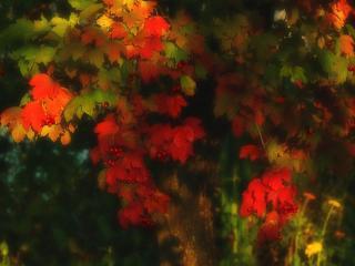 обои Красно-зелёная осенняя листва фото