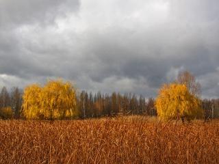 обои Над осеннем полем пасмурное небо фото