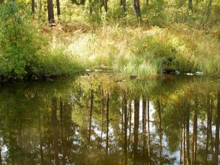обои Начало осени на пруду, в окрестностях Изербель фото