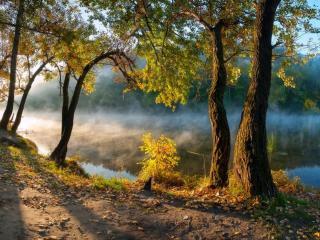 обои Осенние деревья на берегу пруда, в лучах вечернего солнца фото