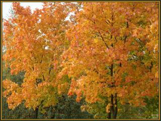 обои для рабочего стола: Осенняя сказка на деревьях