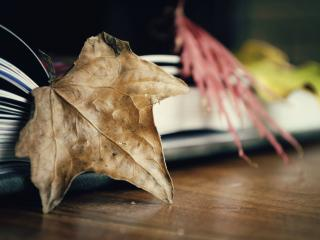 обои Сухие листья в книге фото