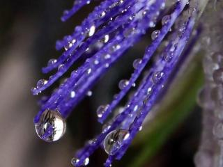 обои Слёзы на ресницах страстоцвета фото