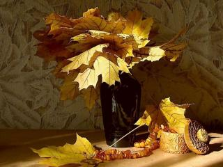 обои Натюрморт - Солнце и листья клена фото
