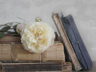 обои Натюрморт - Белый цветок на фолиантах фото