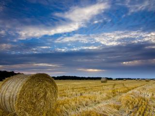 обои Тюки соломы на скошенном поле фото