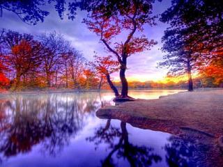 обои Краски осени на реке фото