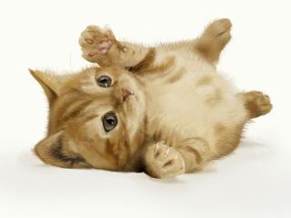 обои Симпатичный котенок лежит на полу фото
