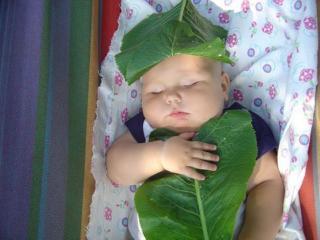 обои Малыш спит укрывшись листом фото