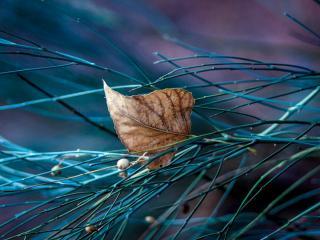 обои Опавший лист в траве фото