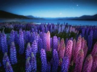 обои Берег озера в Новой Зеландии фото