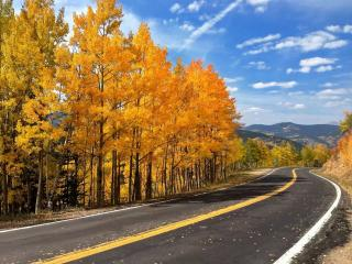 обои Дорога у леса фото
