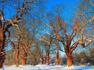 обои Дорога через зимний лес фото