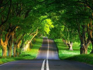 обои Дорога через зеленый лес фото