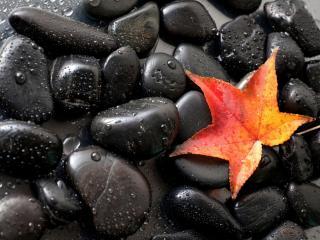 обои для рабочего стола: Лист на мокрых камнях