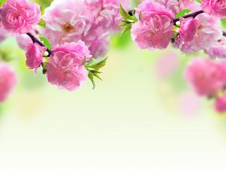 обои Розовые цветы на дереве фото