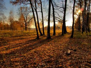 обои Осенний вечер фото