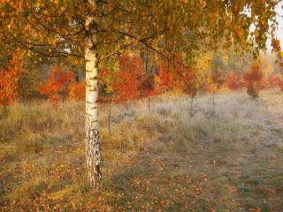 обои Первая изморозь, осеннее деревце в лесу фото
