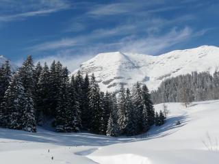 обои Снежные ели у подножия горы фото