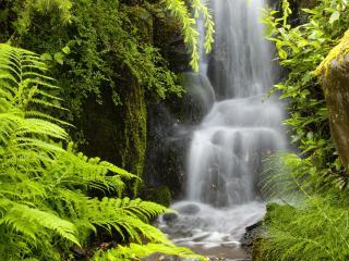 обои Нежный водопад в зарослях папоротника фото