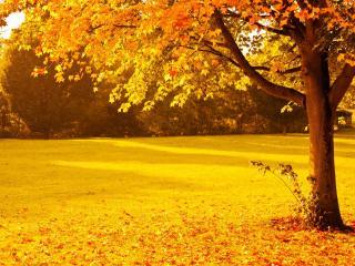 обои Дерево на осенней полянке в парке фото