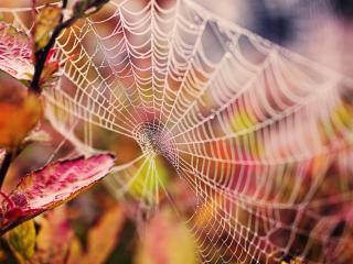 обои Серебрянная паутинка на кусту фото