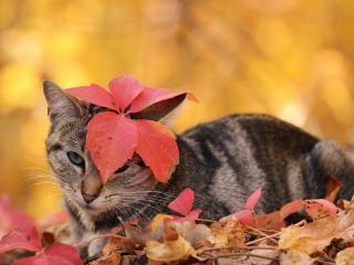 обои Серый котик прикрылся листом фото