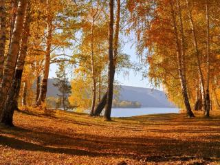 обои Осенний лес у озера фото