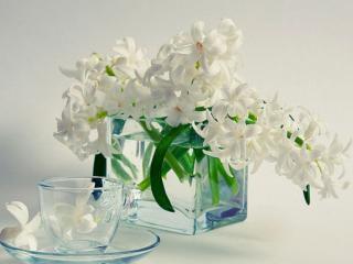 обои Натюрморт - Белый цветок с прозрачной чашкой фото