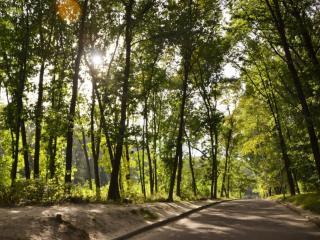 обои Дорога в тени деревьев фото