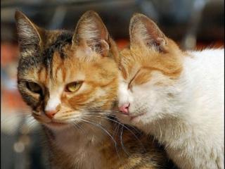обои Кошачьи ласки фото