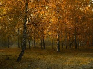 обои Осеннее утро в грибном лесу фото