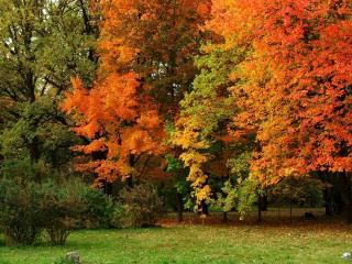 обои Осенние краски леса у опушки фото