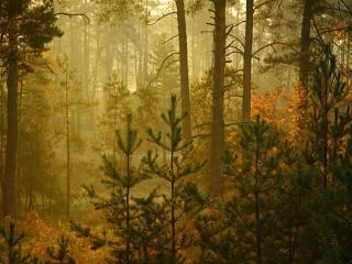 обои Дождь в осеннем лесу фото