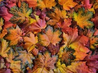 обои Осенний калейдоскоп фото