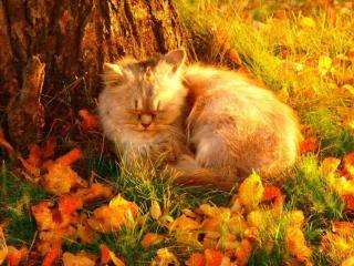обои Осенний кот фото