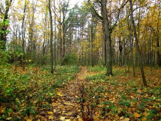 обои Осенняя тропинка фото