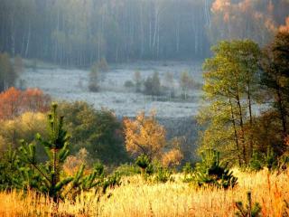 обои Осень в лесу яркая и грустная фото