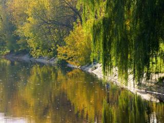 обои Осень,   пруд и зелёная ива фото