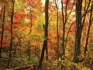 обои В лес пришла осень фото