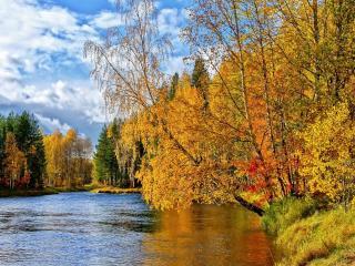 обои Золотая осень над рекой склонилась фото